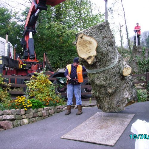 Arboricultural Contracting