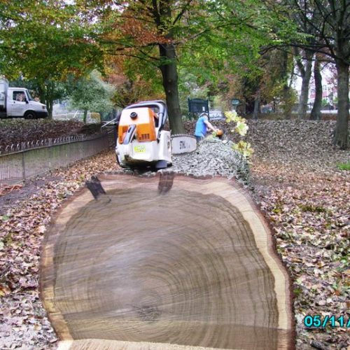 Arboricultural Contracting 3