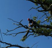 tree-surgery-steve-ambler