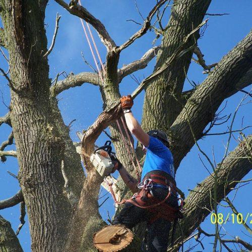 veteran tree management