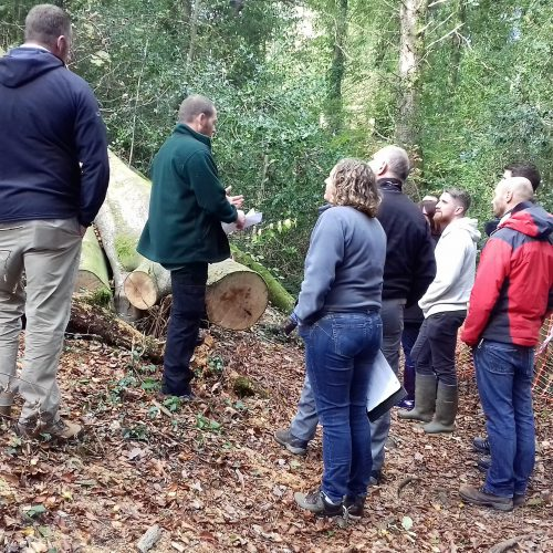 Vaughan leading Tree Condition Training in woodland