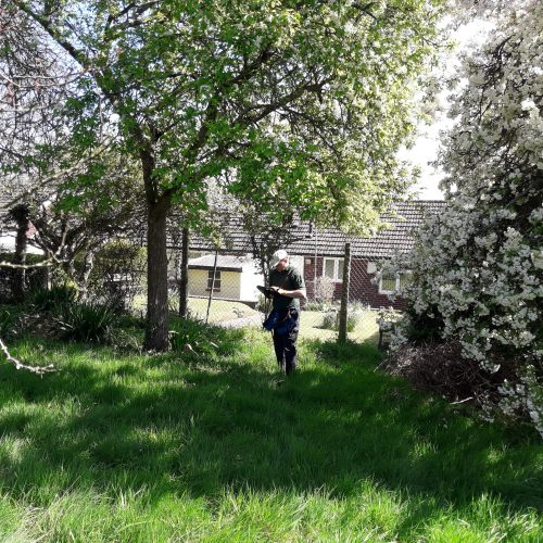 Vaughan surveying an old orchard for restoration